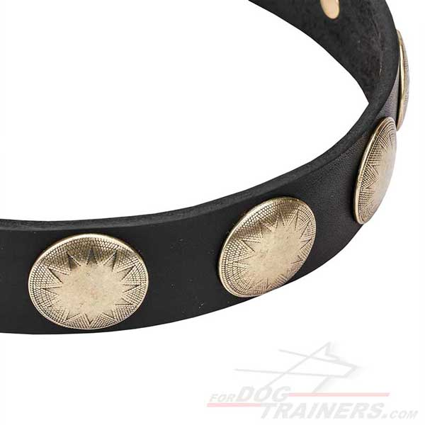 Brass Circles Riveted to Leather Dog Collar