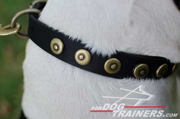 Brass Circles on Designer Leather Dog Collar