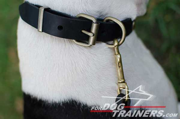Durable Brass Fittings on Leather Dog Collar