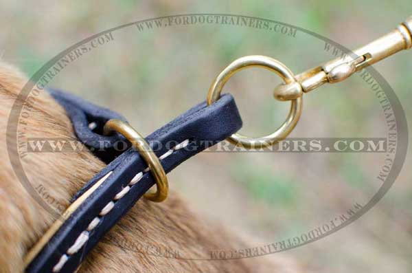 Brass Hardware on Choke Dog Collar