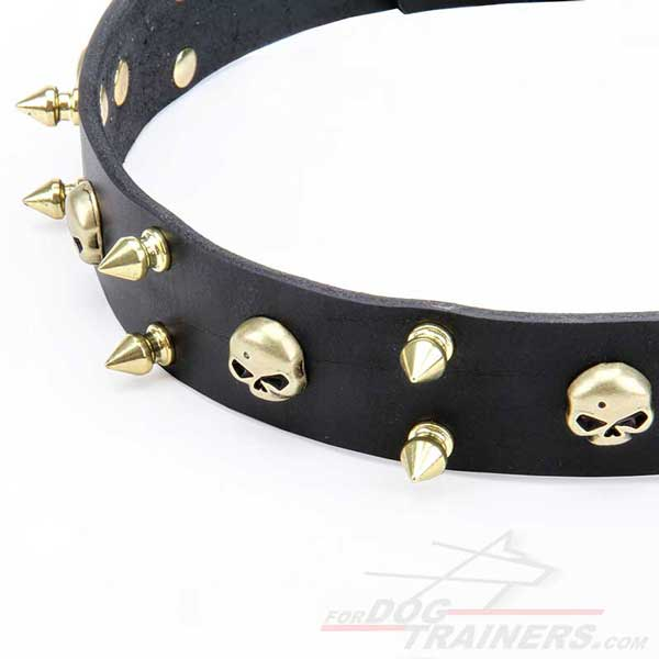 Brass Spikes and Skulls of Canine Leather Collar