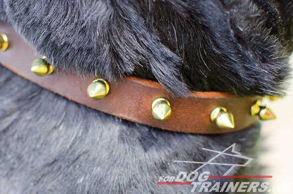 Brass Spikes on Dog Collar Leather Walking Dog Gear