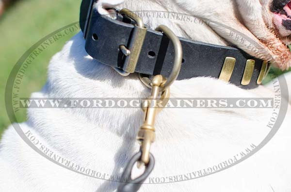 Brass D-ring for dog leash