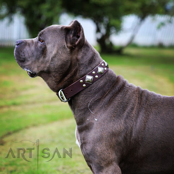 Leather Dog Collar with Chrome Plated Steel D-ring