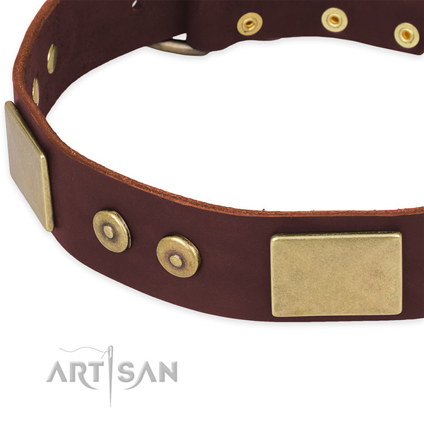 Sturdy brown leather dog collar