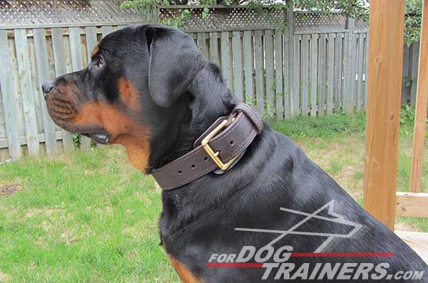 Brown collar for training / walking Rottweiler