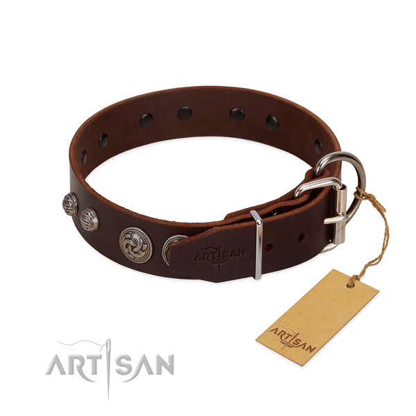 Fancy brown leather dog collar with sturdy fittings