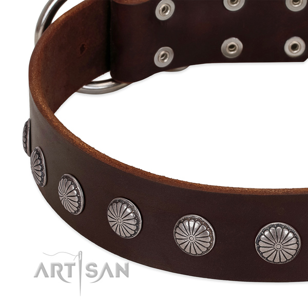 Brown leather dog collar with reliable decorations