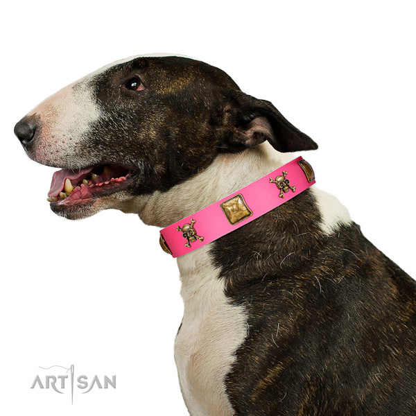Bright pink leather Bull Terrier collar has amazing look