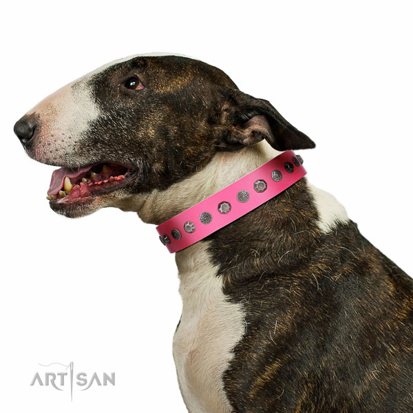 Extraordinary walking pink leather Bull-Terrier collar with