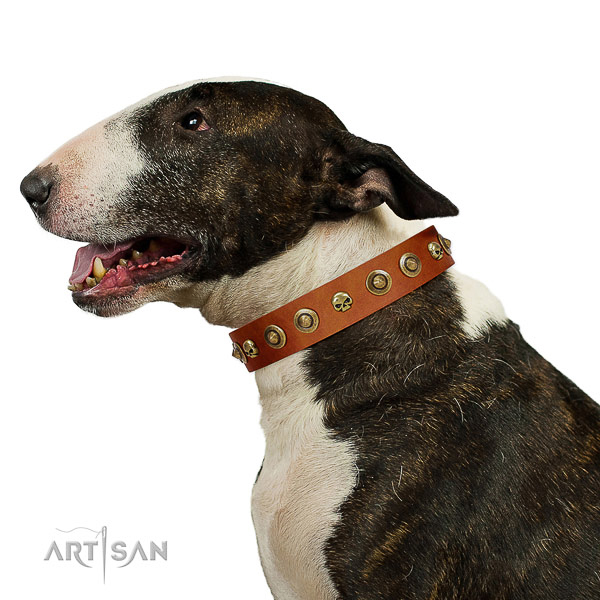 Soft leather Bull Terrier collar for better handling during walks