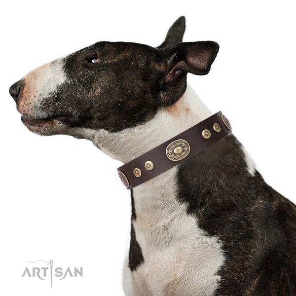 Bull Terrier adorned full grain leather dog collar with studs