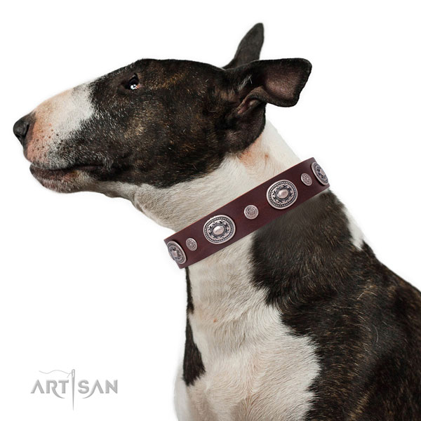 Bull Terrier easy to adjust full grain leather dog collar with embellishments
