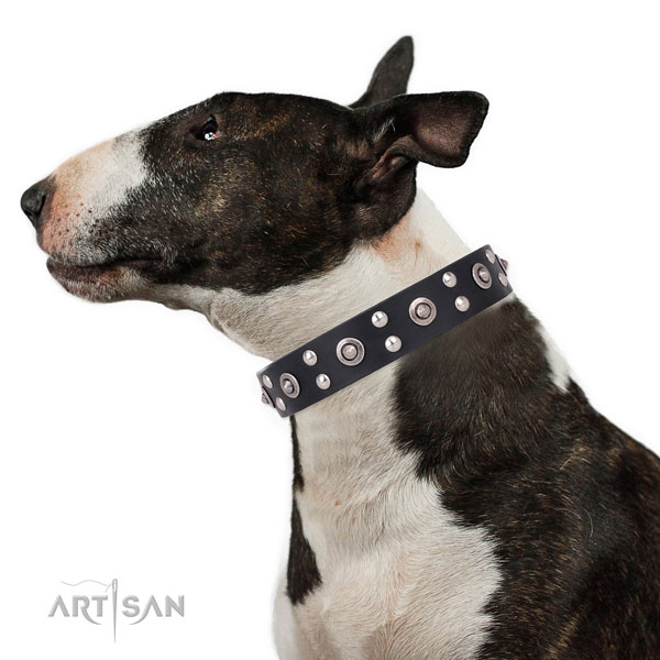 Bull Terrier comfortable full grain genuine leather dog collar with studs