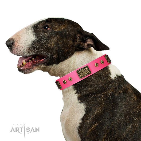 Bull Terrier comfortable wearing dog collar of exceptional quality natural leather