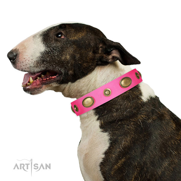 Bull Terrier stylish walking dog collar of awesome quality leather