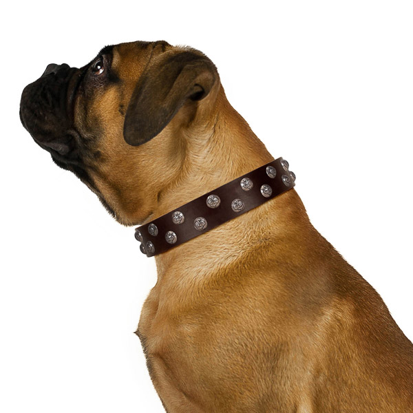 Dependable walking brown leather Bullmastiff collar of premium quality
