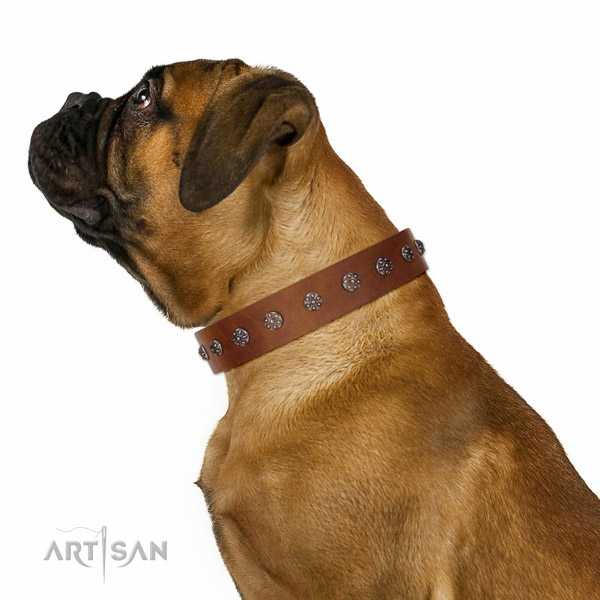 Extraordinary walking tan leather Bullmastiff collar with chic decorations