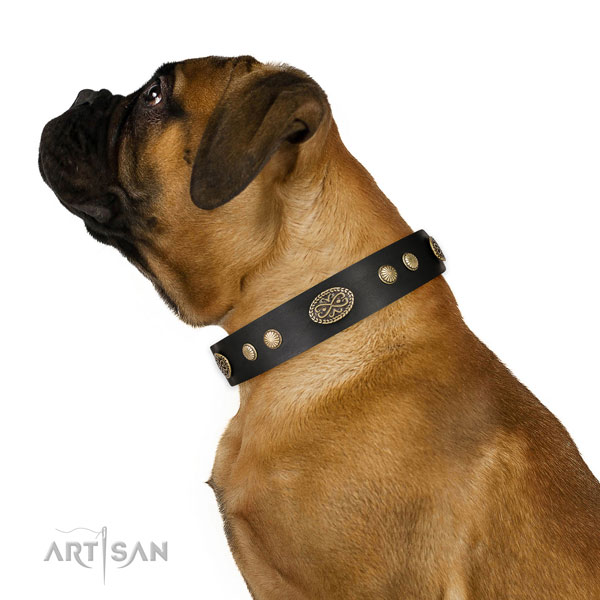 Bullmastiff everyday walking dog collar of flexible leather