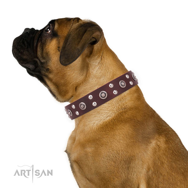 Bullmastiff walking dog collar of incredible quality leather