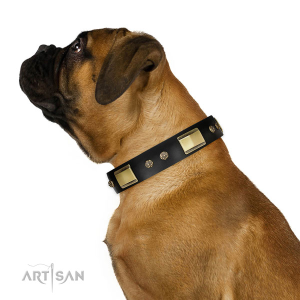 Bullmastiff daily walking dog collar of incredible quality genuine leather