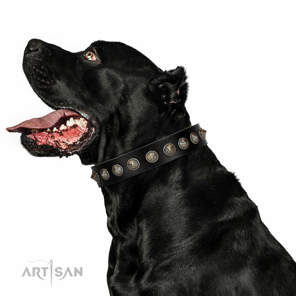 Walking top-notch quality walking leather Cane Corso collar