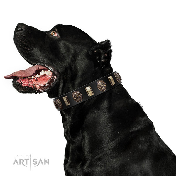 Cane Corso Genuine Leather Dog Collar with Riveted Decorations