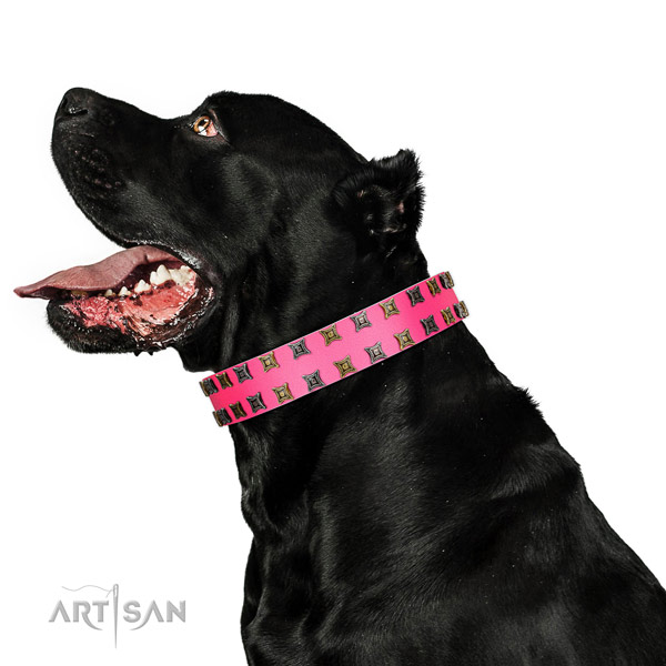 Bright Pink Leather Cane Corso Collar for Supreme Look