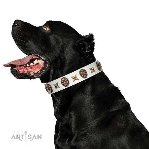 Strong Cane Corso Collar Made of Full Grain Genuine Leather