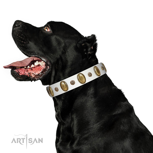 Soft Cane Corso leather collar for walking