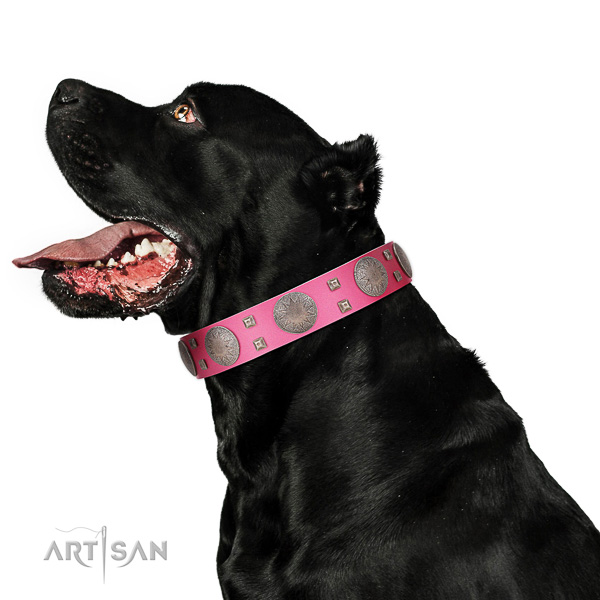 Extraordinary walking pink leather Cane Corso collar with chic decorations