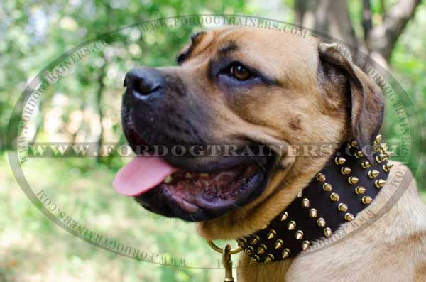 Designer Leather Cane Corso Collar