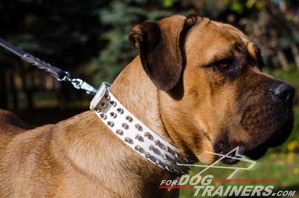 Spiked Leather Cane Corso Dog Collar