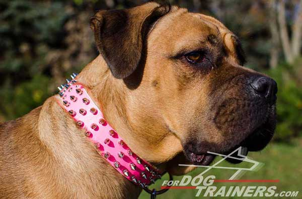 Spiked Pink Leather Cane Corso Collar