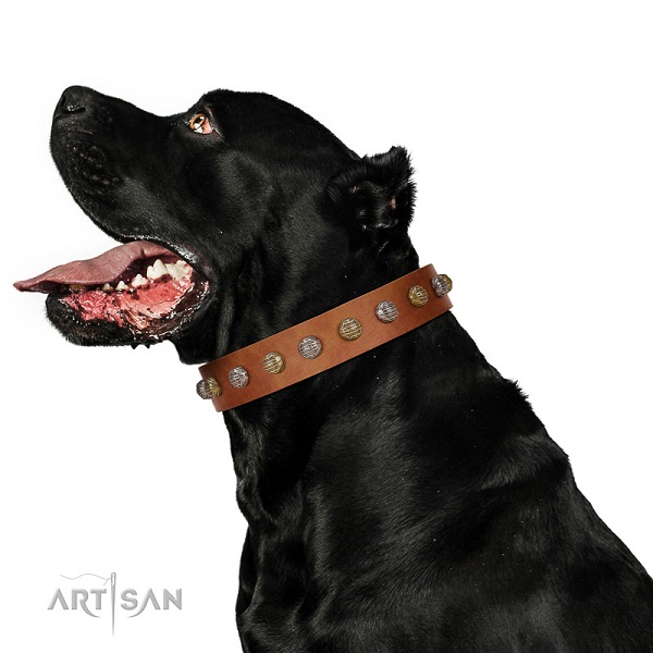 Full grain natural leather Cane Corso collar with decorations