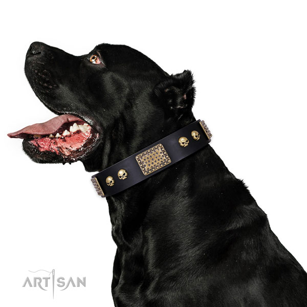 Cane Corso everyday use dog collar of fashionable genuine leather