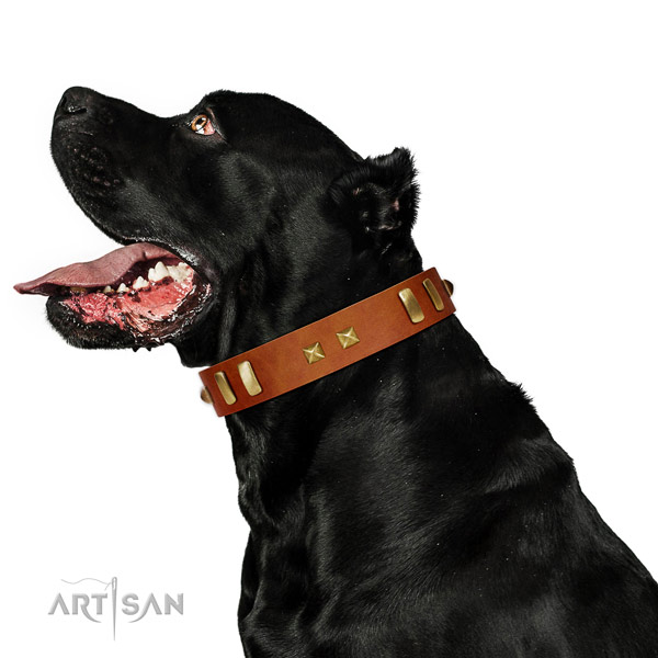 Daily walking dog collar of fine quality leather