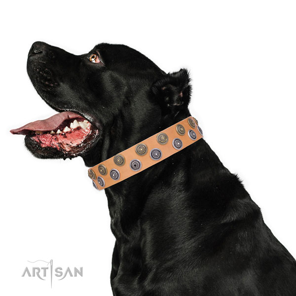 Cane Corso inimitable full grain leather dog collar with decorations