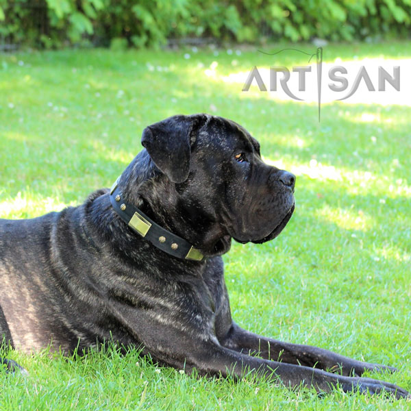 Remarkable Design Leather Cane Corso Collar for Stylish Dogs