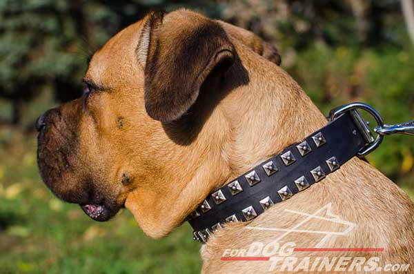 Leather Dog Collar studded