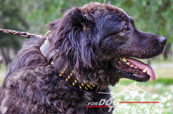 Wide Leather Caucasian Shepherd Collar