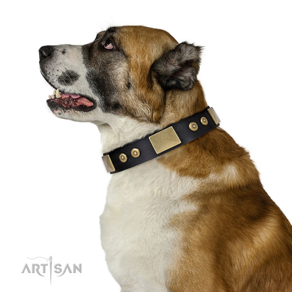 Central Asian Shepherd daily walking dog collar of flexible genuine leather