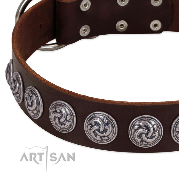 Brown leather dog collar with silver-like decorations fow