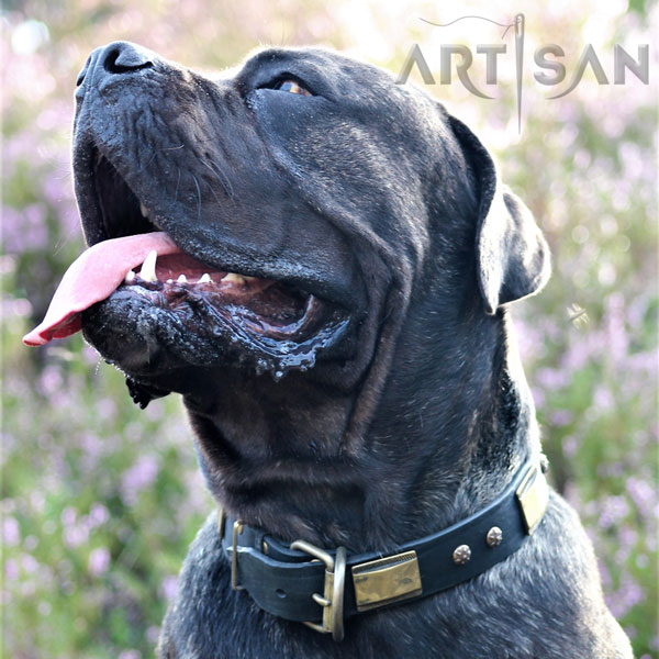 Handmade Leather Cane Corso Collar with Rust-proof Hardware