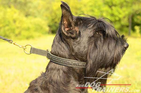 Choke Riesenschauzer Collar Dog Training