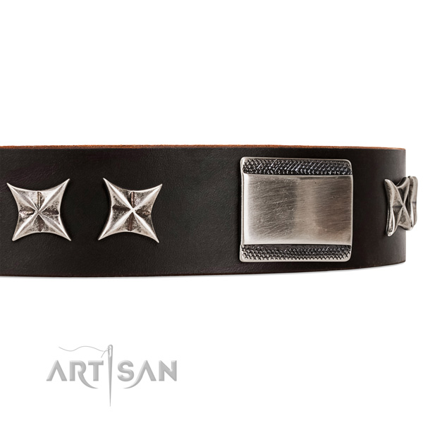 fashionable leather dog collar with chrome-plated adornments
