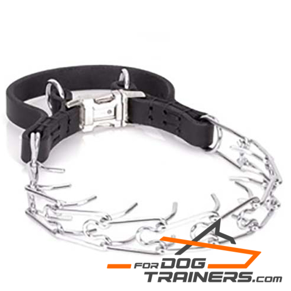 Chrome plated Dog Pinch Collar with Secure Buckle