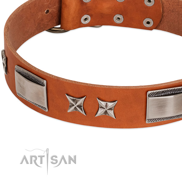 Tremendous tan leather dog collar with chrome plated