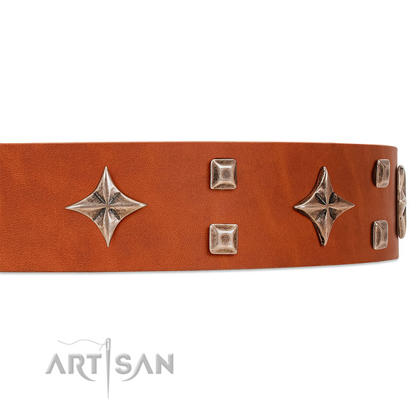 Premium quality tan leather dog collar with attractive stars and studs