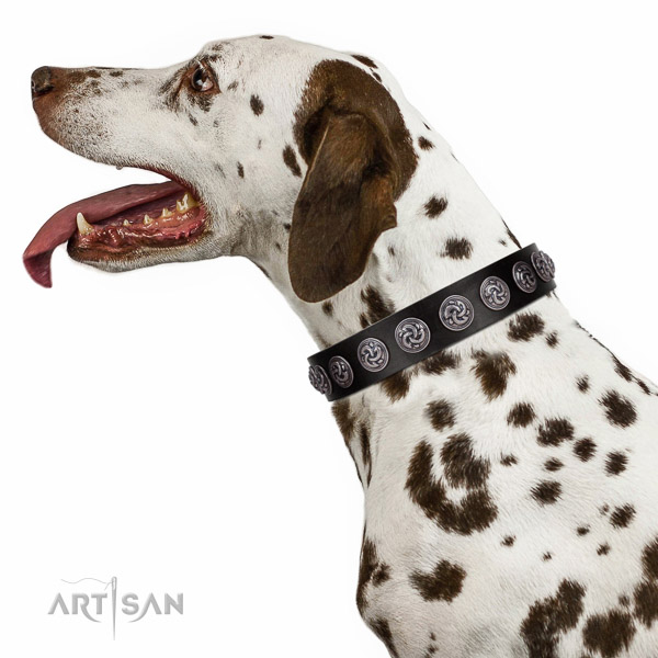 Extraordinary walking black leather Dalmatian collar with chic decorations